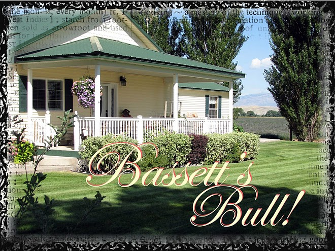 Basset's Bull!