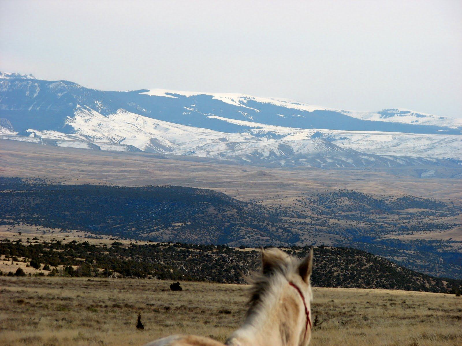 The view from horseback!
