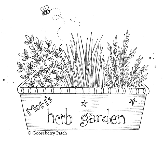 dbae7c29e4c Herbs are easy to grow, even indoors on a sunny windowsill! Fragrant and  tasty, rosemary, oregano, savory, parsley, sage thyme or chives are  delicious in ...