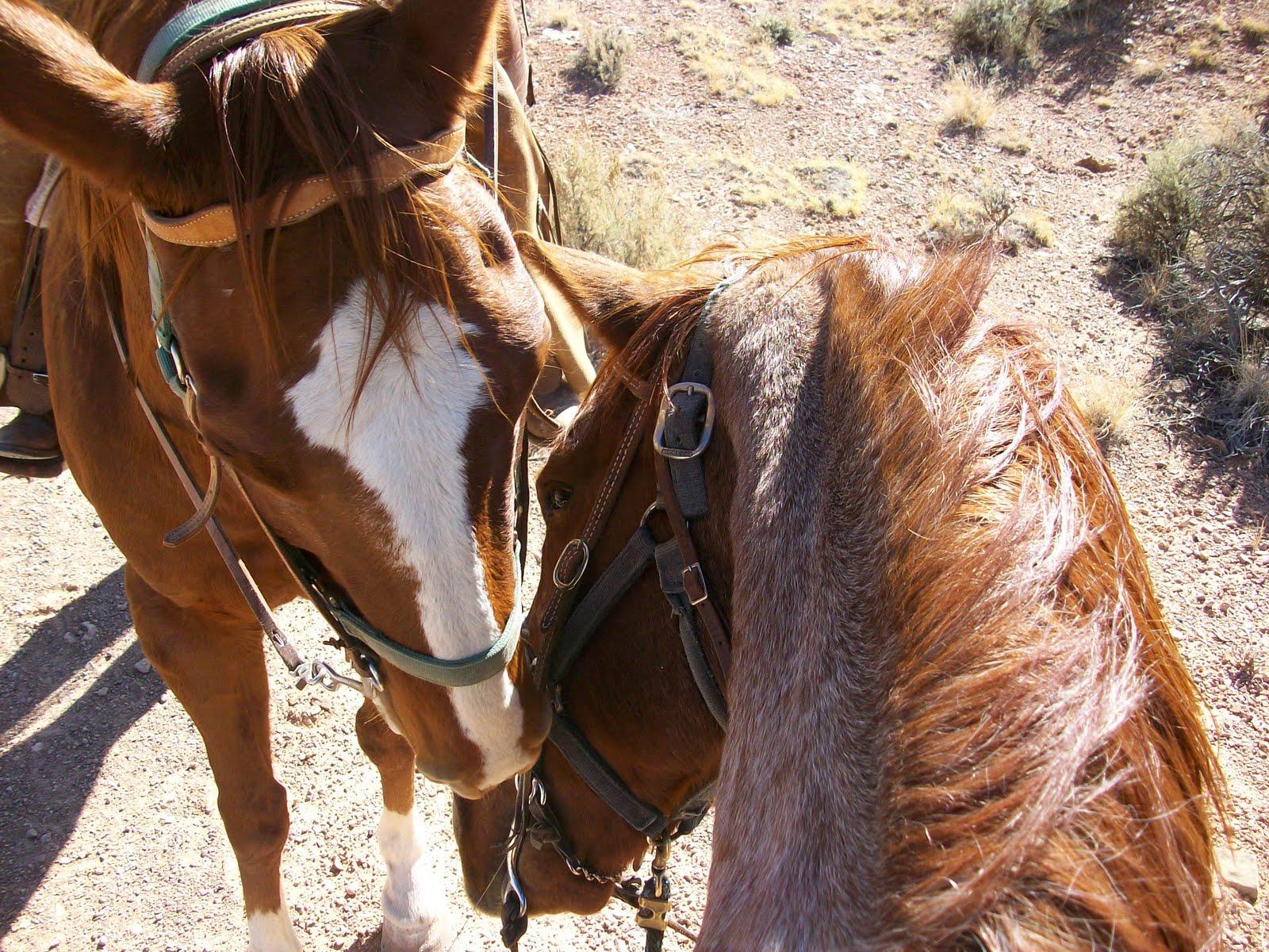Horses playing tug o' war!