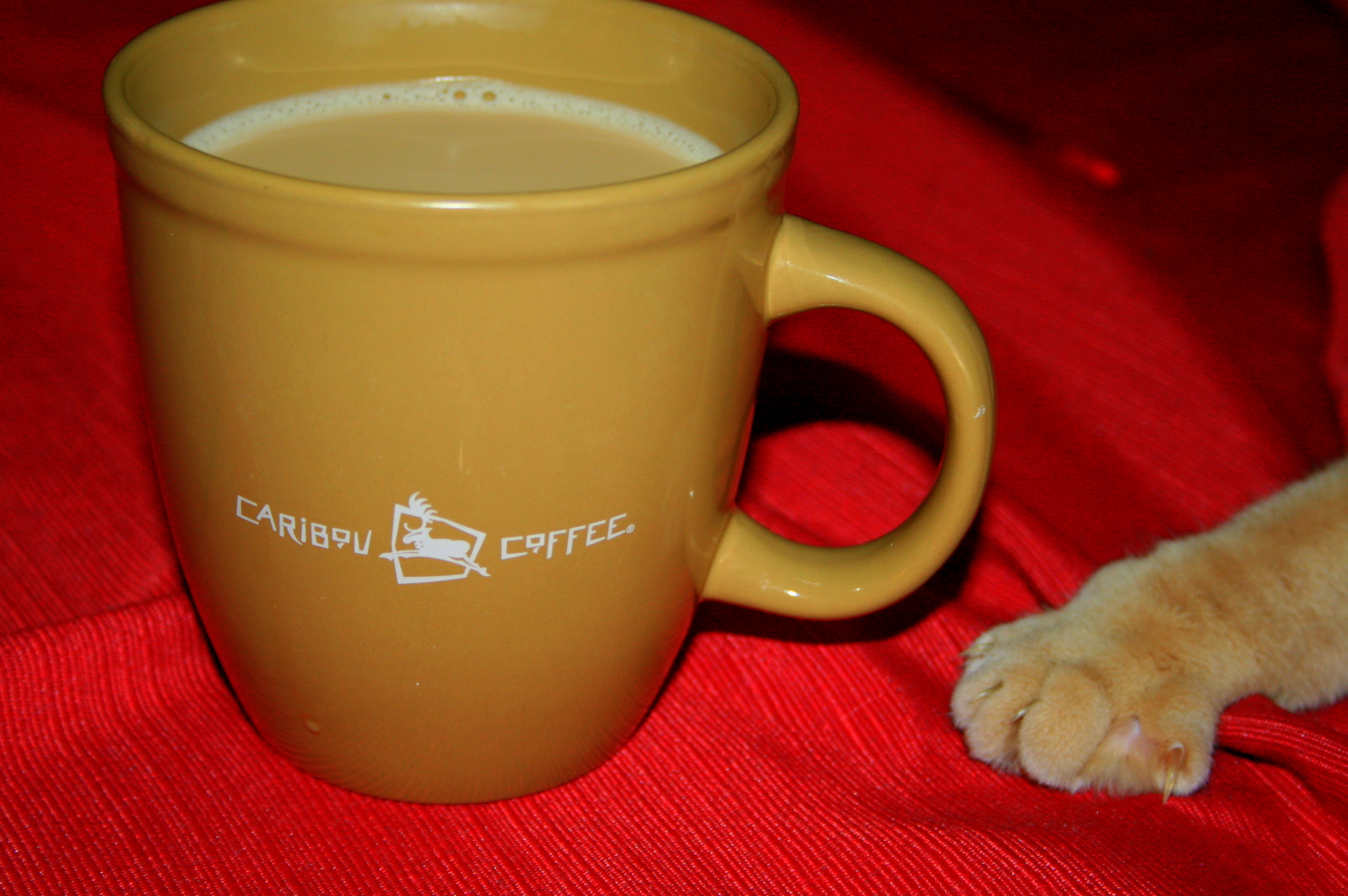 Aslan wants coffee too!