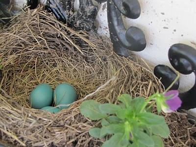 Robin's nest on the porch!