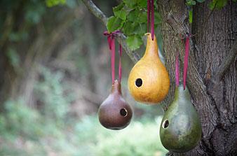 Gourd-birdhouse_medium